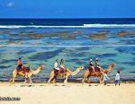 Bali Camel Safari in Nusa Dua